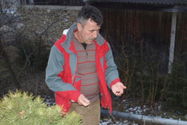 Kanadská odroda brusníc rodí dvakrát do roka, v lete aj v zime.