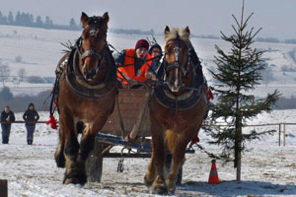 V prvej disciplíne museli dvojzáprahy prejsť slalomom okolo pripravených prekážok. Väčšina koní s tým nemala problémy.