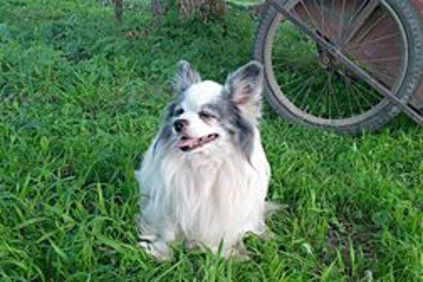 Pätnásťročného psíka zabili dva voľne pobehujúce psy v Zakvašove.