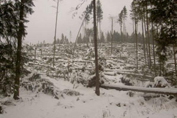 Po vyťažení tejto spúšte na Pekárke v Oravskej Polhore zostal na veľkej ploche holorub. Potrvá desaťročia, kým tu po výsadbe vyrastie nový les.