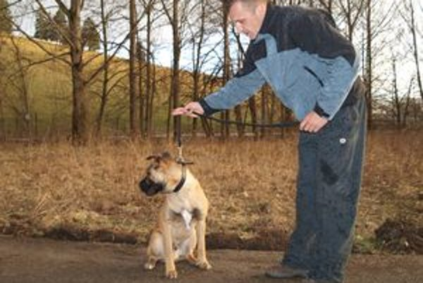 Ďalším psíkom, ktorého má Tomáš naučiť poriadku, je kríženec boxera Aron.
