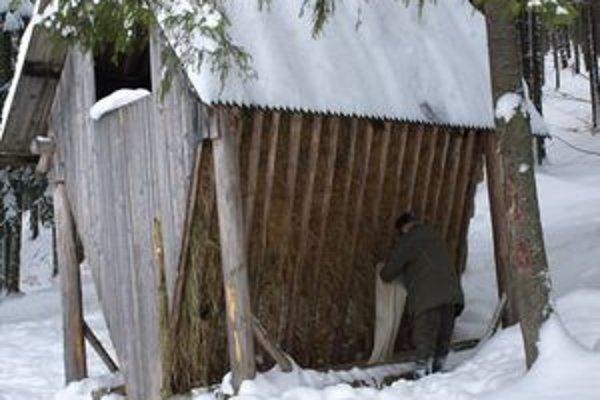 Keď napadne sneh a udrú mrazy, zver sa k potrave dostáva len veľmi ťažko. Preto jej lesníci pravidelne vozia pripravenú zmes.