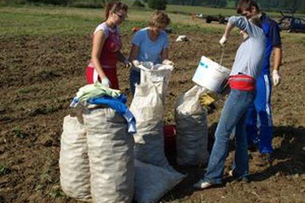 Na zemiakovej brigáde u Glonekovcov sa zišiel dostatok šikovných rúk. Zber zemiakov na hektárovom poli mali hotový za niekoľko hodín.