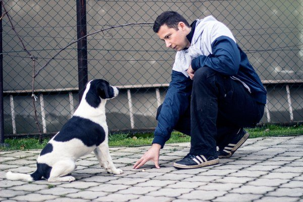 Pes musí vedieť, kto je pánom.