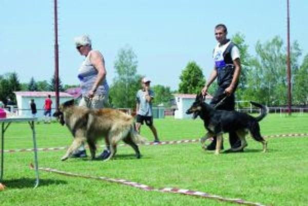 Disciplinované psy oddane poslúchali povely svojich psovodov.