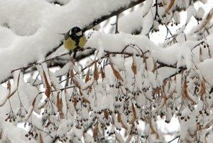 Vtáci prišli za pár hodín o zdroj potravy, mali by sme ich prikrmovať.