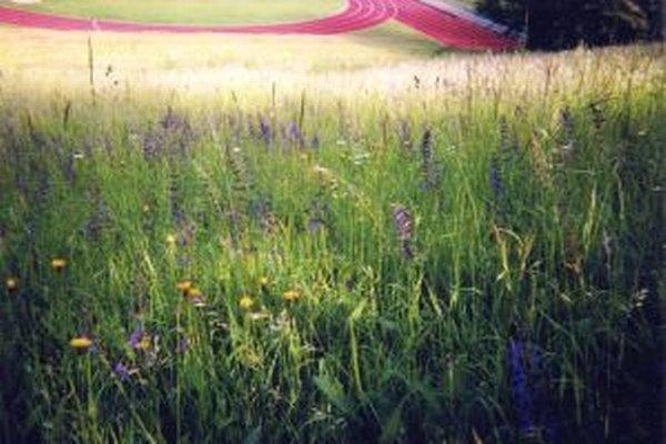 Biotopy na kopci vedľa atletickej dráhy.