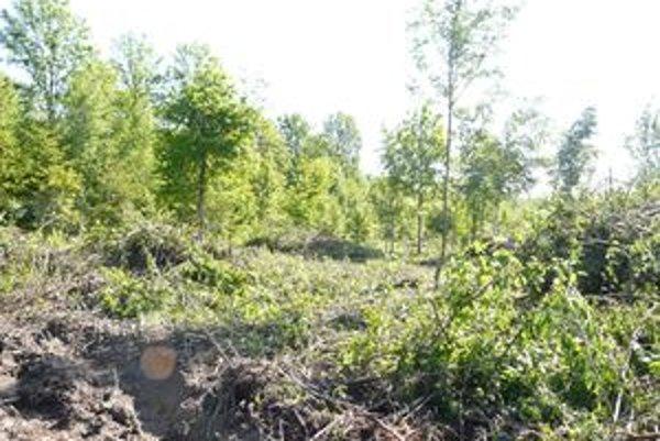 Lesný úrad i majiteľ tvrdí, že les je len preriedený, konkurencia za tým vidí prípravu na výstavbu a porušenie zákona.