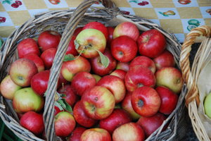 Jablkové hodovanie v Modre.