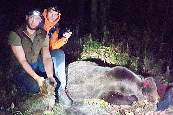 Juraj Žiak (vľavo) a Ivan Daráni odopli medveďovi obojok.