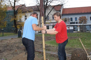 Dobrovoľníci pripravujú jamu na vysadenie stromu na Námestí slobody v Prievidzi.