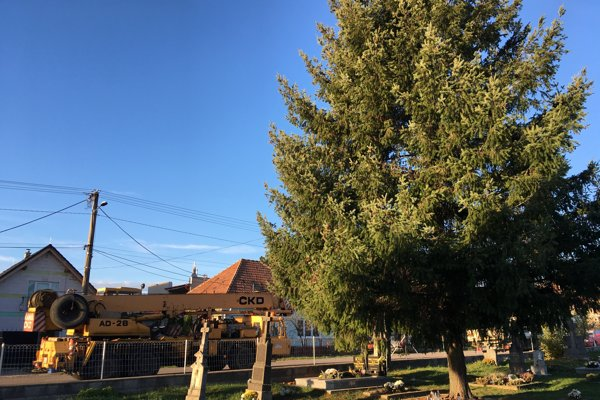 Obor z Dolných Orešian bude ozdobou Trojičného námestia.