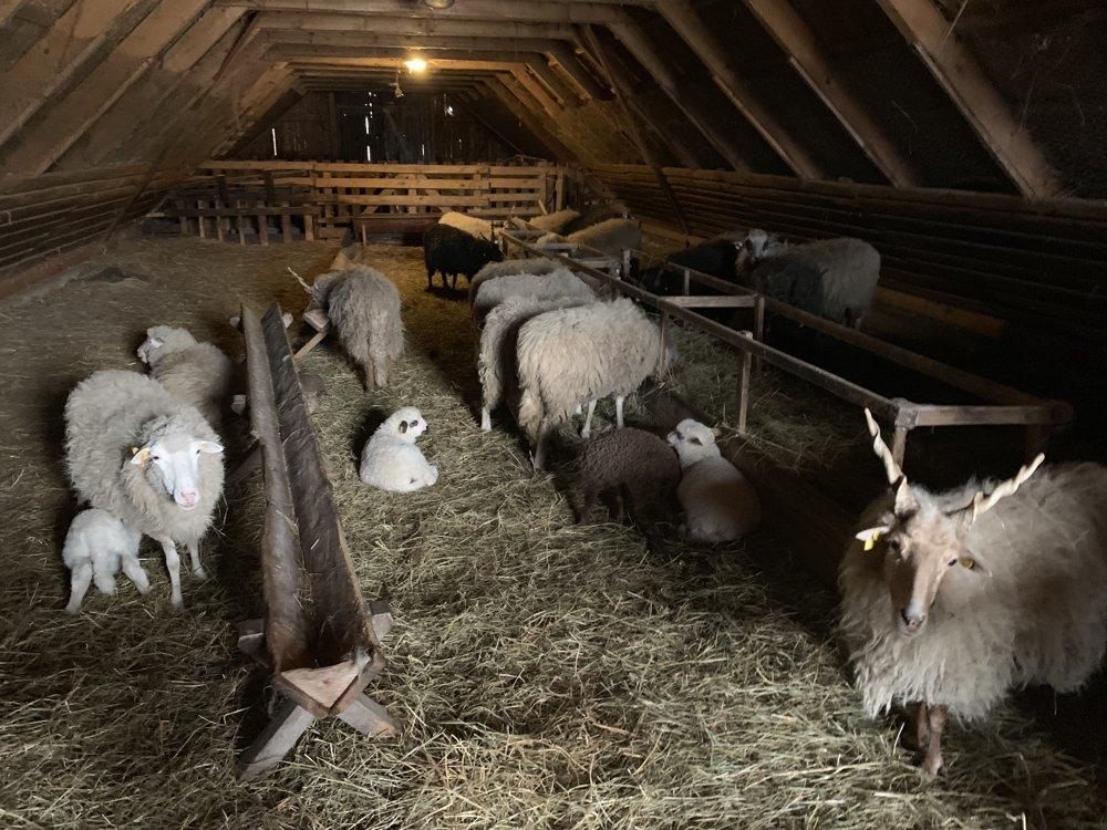 Zvieratká v maštali