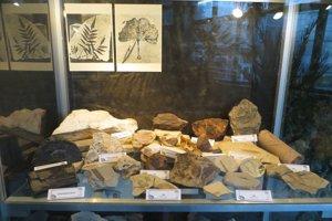 Kamenný herbár v Botanickej záhrade.
