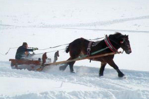 Jedna z disciplín preverila rýchlosť a vytrvalosť koňa.