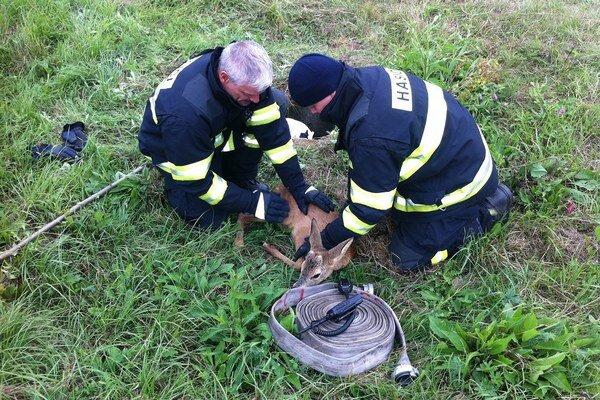 Na lúkach číha veľké nebezpečenstvo v podobe odkrytých kanalizačných šácht. Spadol do nej aj srnček, hasiči ho včas vytiahli.