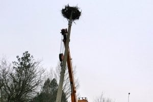 Správa Tatranského národného parku zabezpečila nový betónový stĺp, na jeho koniec pripevnili špeciálnu spevnenú konštrukciu, ktorá poslúži ako podložka pod hniezdo.