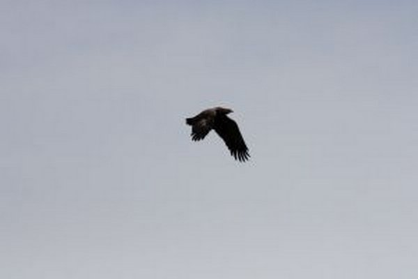 Let orla do Afriky možno sledovať na internete vďaka vysielačke.