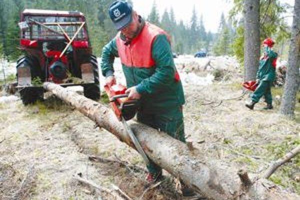 Lesníci hovoria, že lepšie výsledky sa v lesoch dosiahnu drobnými zásahmi, napríklad, aj proti lykožrútovi.