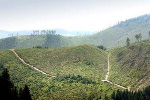 Lesy národného parku sú plné holín.