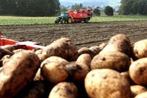 Úroda zemiakov je zatiaľ v poriadku. Poškodiť by ju mohlo krupobitie, alebo silné prívalové dažde, ktoré sprevádzajú letné suchá.