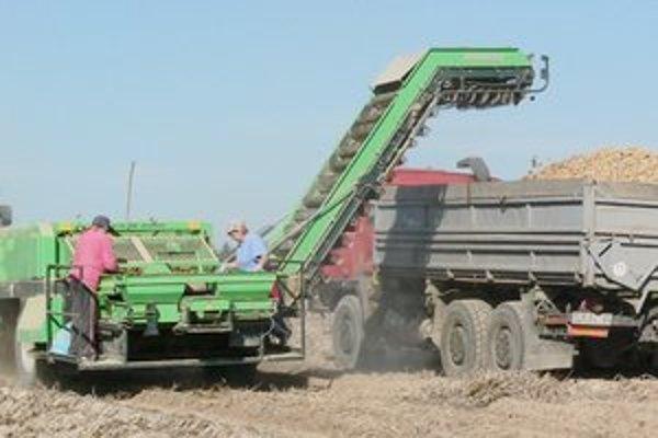 Pestovatelia počítajú s tým, že dopyt po domácich zemiakoch nebude vysoký.