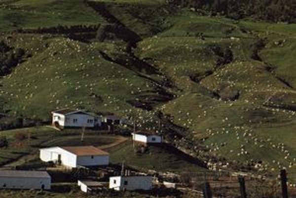 Biele  bodky na fotografii sú ovce. Na Novom Zélande ich je asi 60 miliónov. Pasú sa voľne na lúkach, nedoja ich. Chovajú ich hlavne pre vlnu, z ktorej vyrábajú kvalitné nepremokavé košele.