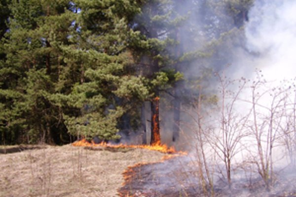 Ľudia veria omylu, že vypaľovanie suchej trávy pomôže rastu novej