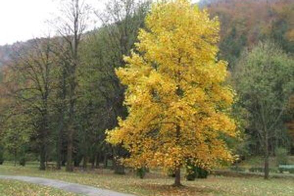 Nová cesta bude slúžiť nielen lesníkom, ale aj turistom a rekreantom.
