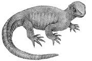 Takto zrejme vyzeral dávny predok dnešných korytnačiek pappochelys rosinae, ktorý ešte nemal pancier.