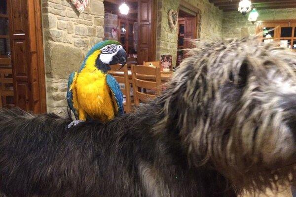 Papagája Pedra policajti rýchlo vypátrali.