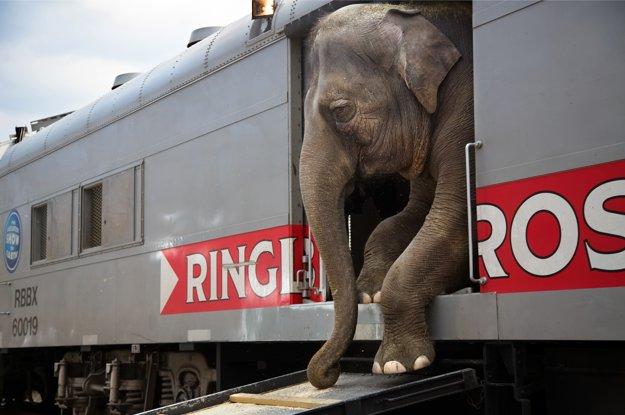 Cirkusový vlak má 61 vozňov a počas 44 týždňov v roku prejazdí 20.000 míľ od pobrežia k pobrežiu USA.