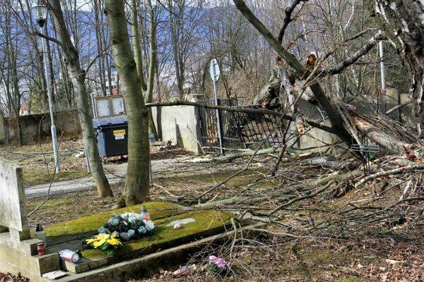 Spadnutý strom na Jahodníckom cintoríne v Martine.