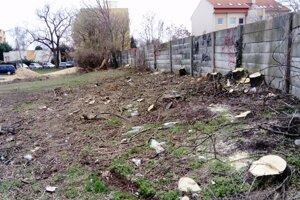 Na podnet mesta dal majiteľ parcely vypíliť hlavne invazívne druhy stromov.