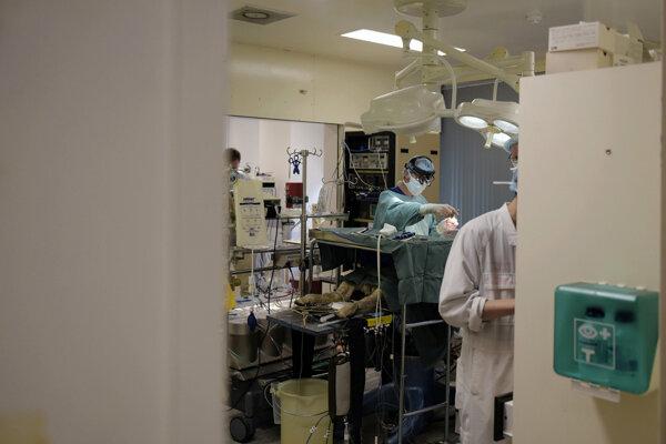 Austrálsky chirurgický tím Foleyho inštitútu neurovedy a duševného zdravia operuje srdce mladej ovce. Pokus má ukázať prečo môže zákrok pod anestézou viesť k poškodeniu obličiek.