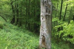 Lebka sa našla v lesnom poraste.
