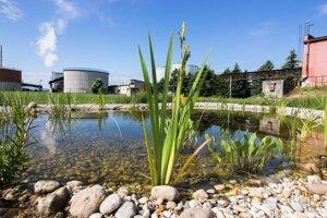 Aj v čistiarni odpadových vôd sa dá vytvoriť krásne prírodné prostredie.