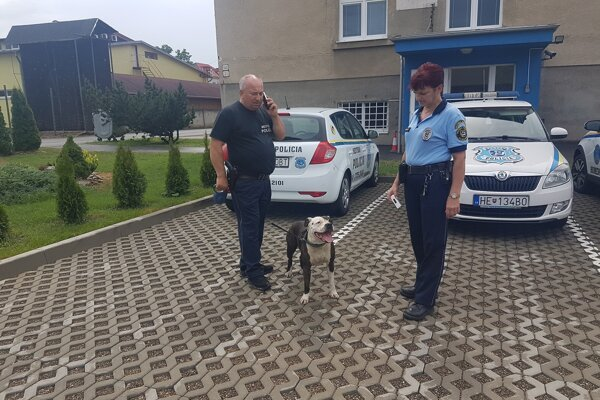 Policajti Anton Fic, Alena Kuliková a čierna pasažierka Mia.