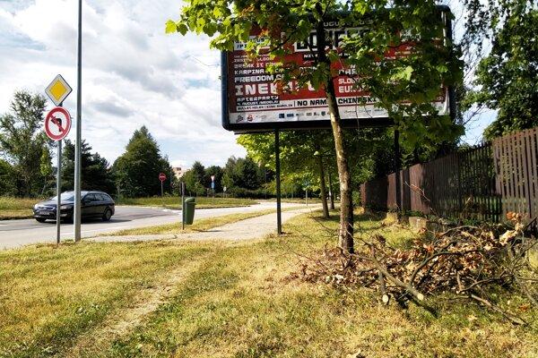 Platan orezali a konáre nechali na zemi. Strom stojí pred bilboardom.