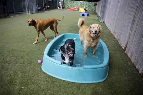 Psy najviac žiarlia na iné psy. A potom na hračky.