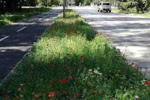 Trávniky medzi cestami sú ideálnym miestom na vznik úsekov s lúčnymi kvetmi a nižšou frekvenciou kosenia. Takto vyzerá projekt v Trnave.