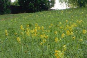 Takáto prirodzená lúka je na okraji sídliska Sever v Martine.