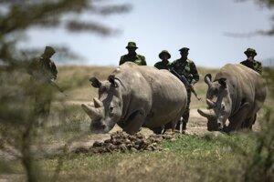 Nosorožce tuponosé severné kedysi obývali viacero štátov východnej aj strednej Afriky.
