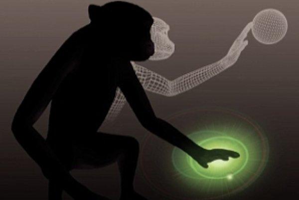 Vďaka implantátu opice cítili virtuálne objekty.