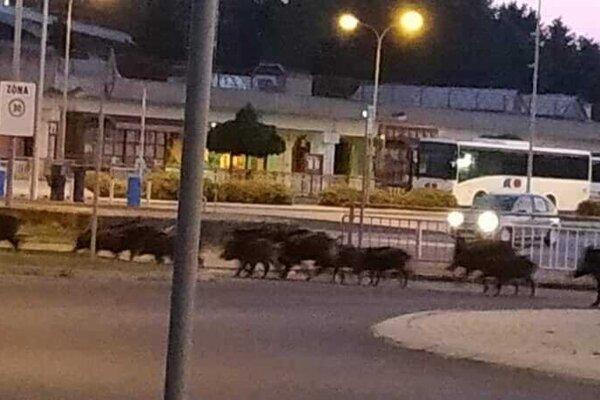 Diviaky na autobusovej stanici.