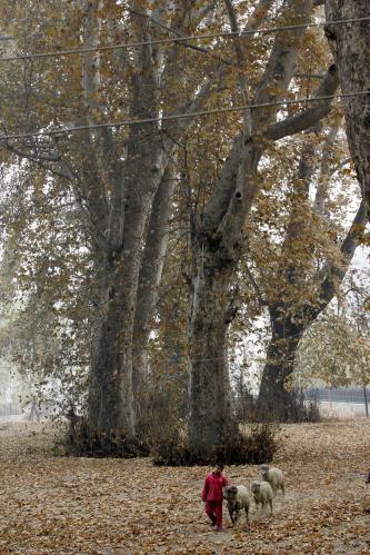 jesen-srinagar3_tasrap.jpg