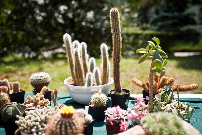 sm-0528-007f-kaktus.rw-820.jpg