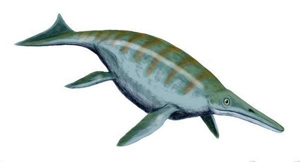 shonisaurus_bw_2_r8568_res.jpg