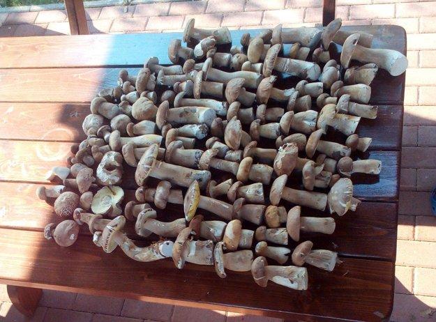 Až 112 dubákov našiel v hore Simon Adamec z Nitrianskeho Rudna.