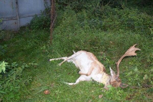 Uhynutý daniel bol nájdený pred bránou farmy.